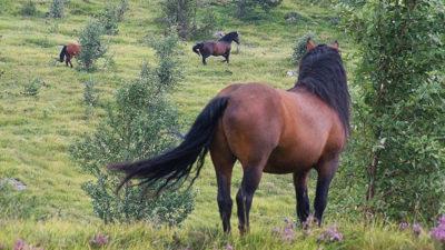 cavalli aveto 1920