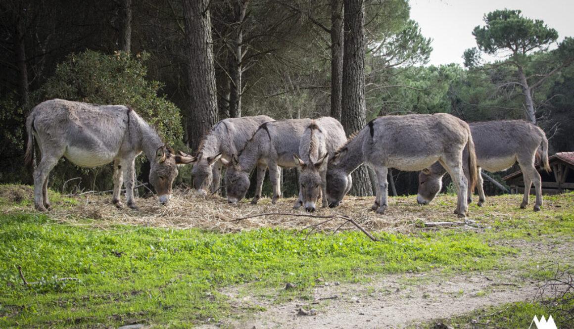 Il parco dell'asino sardo